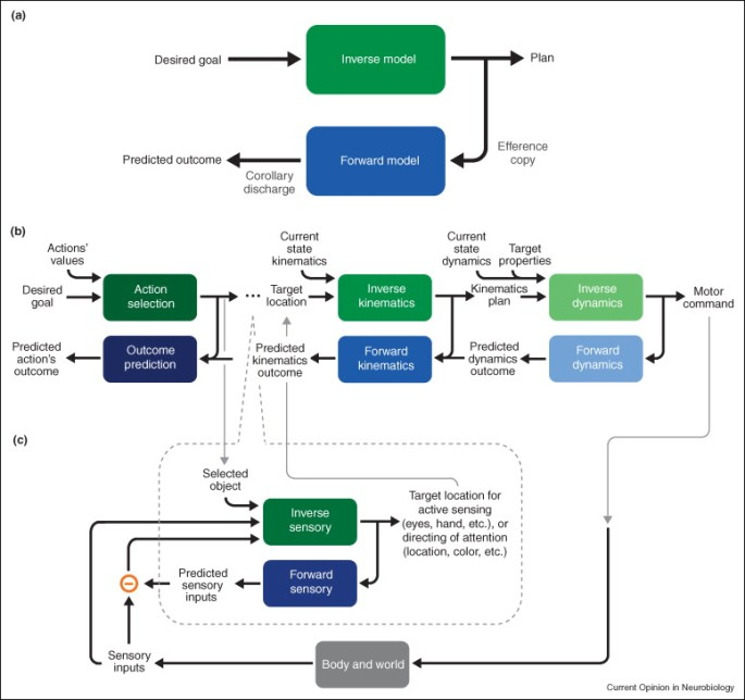 Sensorimotor Diagram